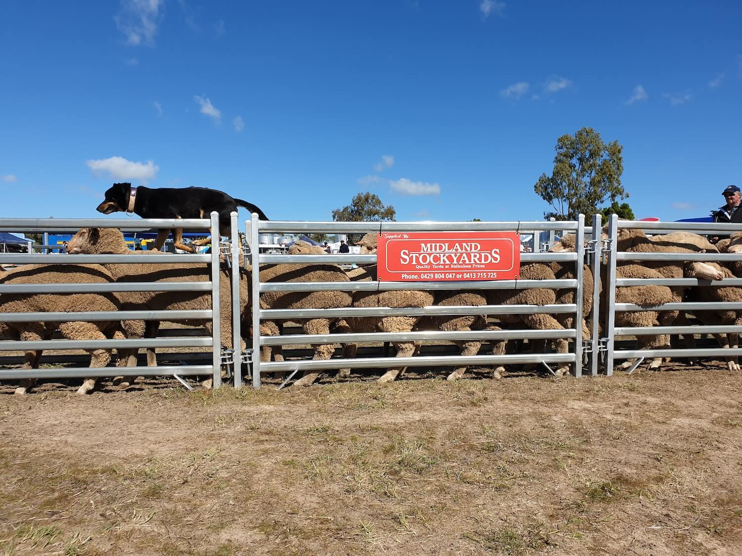 Midland Stockyards Portable Panels
