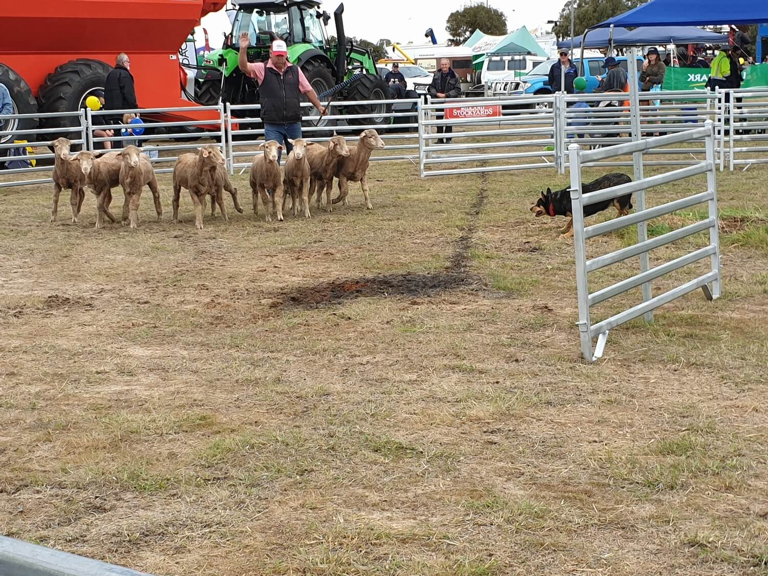 Midland Stockyards Sheep Dog Trial