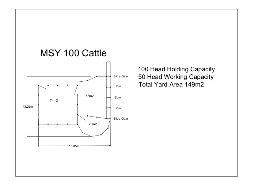 MSYC 100 Cattle