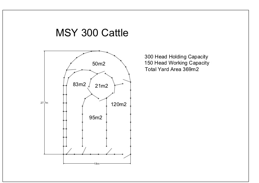 MSYC 300 Cattle