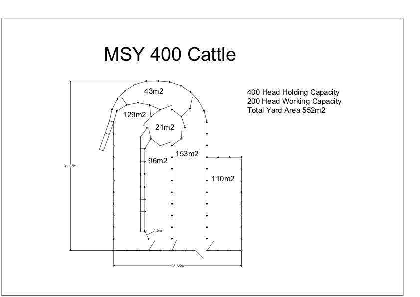 MSYC 400 Cattle