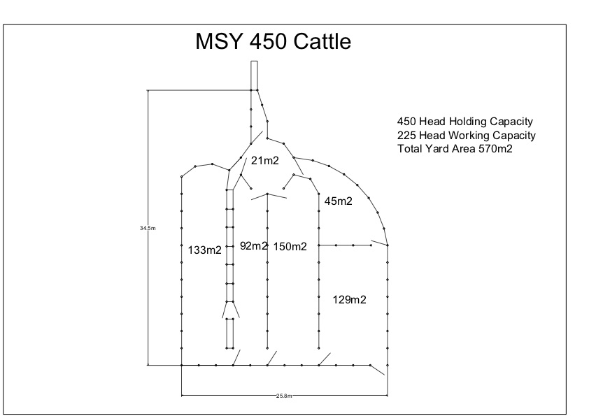 MSYC 450 Cattle