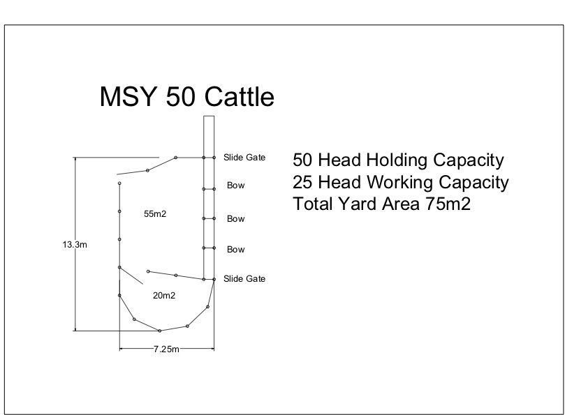 MSYC 50 Cattle